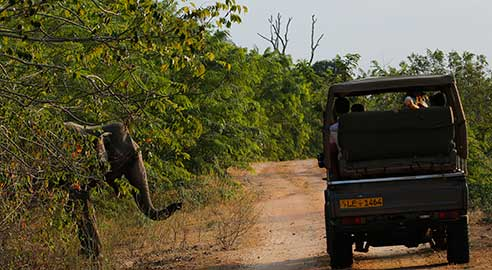 Noel Rodrigo's Leopard Safaris highlight